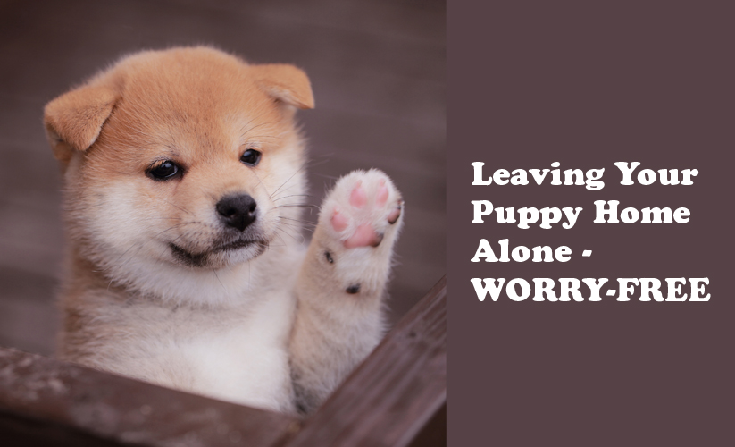 Leave Your Puppy Alone With No Fear