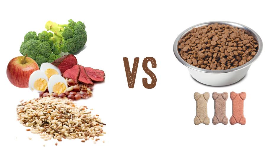 shiba inu dog food choices
