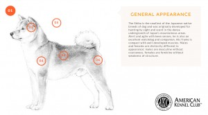 akc breed standards infographic