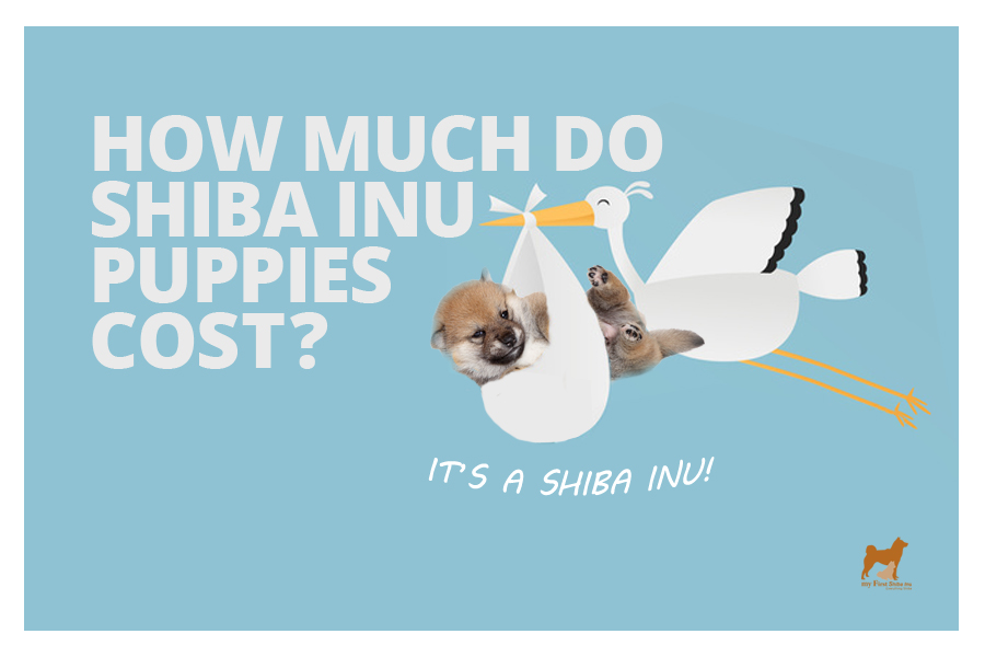 How Much Do Shiba Inu Puppies Cost?