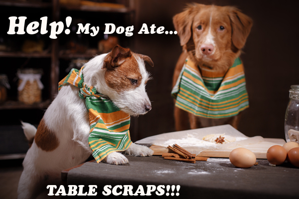 What Happens To a Dog Who Eats Table Scraps