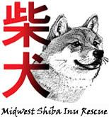 shiba inu shelter midwest shiba inu rescue