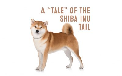 The Shiba Inu Tail – It's Curling Crown of Confidence