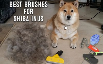 The Best Brushes For Shiba Inus