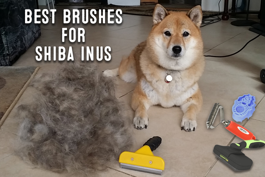 The Best Brushes For Shiba Inus My First Shiba Inu