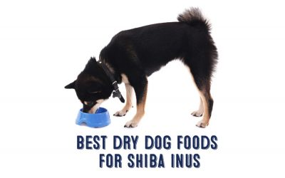Best Dry Dog Food For Shiba Inus