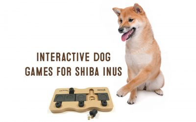 Top 10 Best Interactive Dog Toys For Shiba Inus