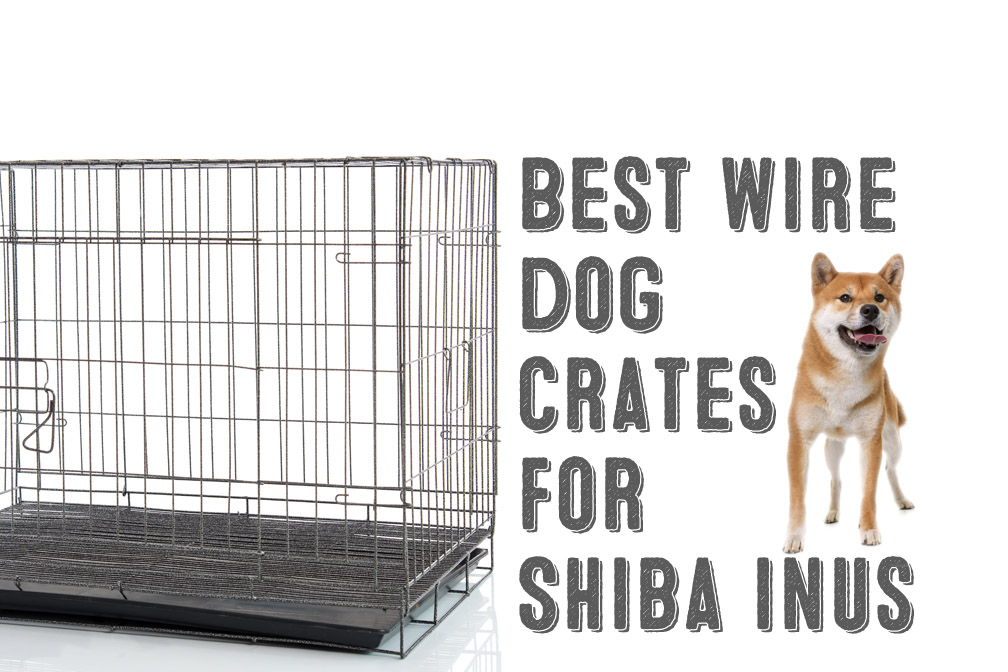 Best Wire Dog Crates For Shiba Inus