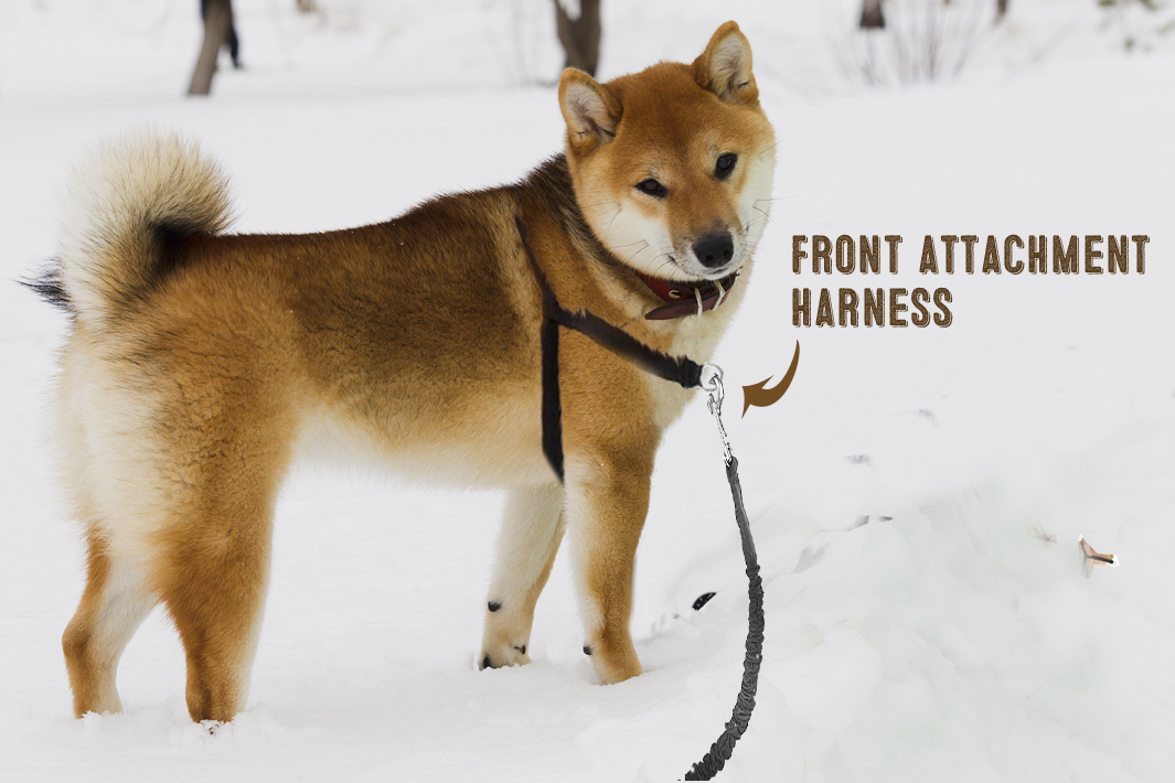 no pull dog harness front attachment example