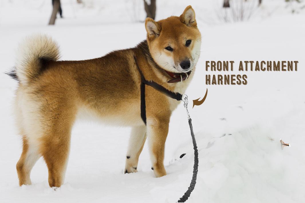 Best Dog Collar For Shiba Inu