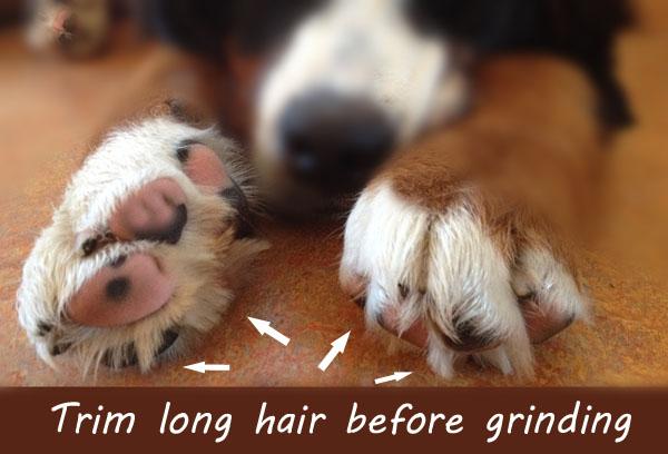 dog nail grinding instructions