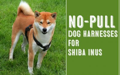 Two Of The Best No Pull Dog Harnesses For Shiba Inus