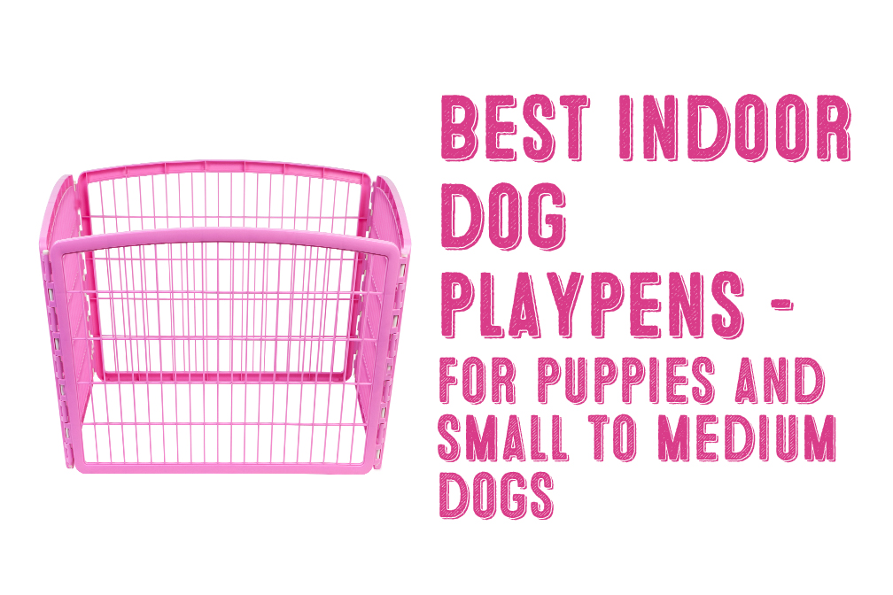 The Best Indoor Dog Playpen For Small To Medium Dogs