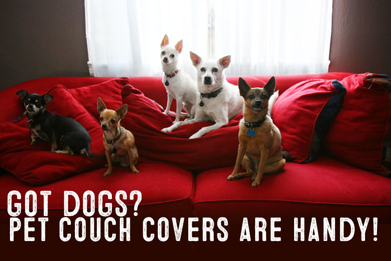 Best Pet Furniture Covers For Couches