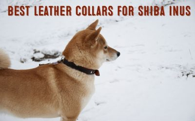 Best Leather Collars For Shiba Inus