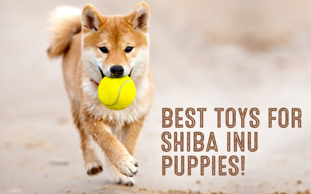Best Toys For Shiba Inu Puppies