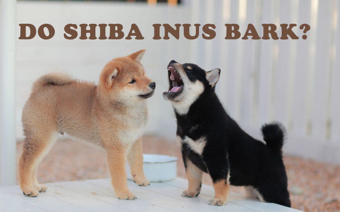 Do Shiba Inus Bark?