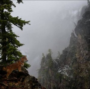shiba_in_mountains_beautiful copie