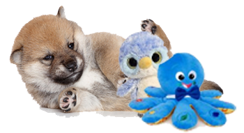 shiba inu puppy and toys