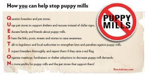 graphic - avoid puppy mills