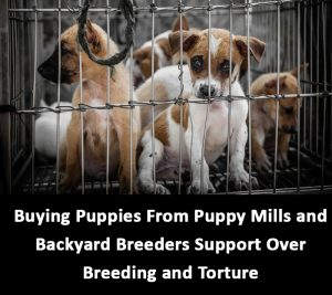 puppies from puppy mills