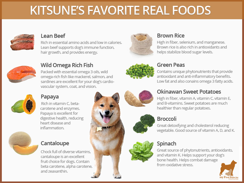 Best Dog Food For Shiba Inus My First