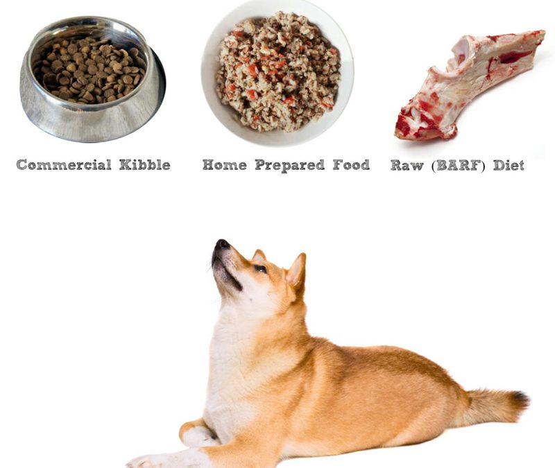 Best Dog Food For Shiba Inus