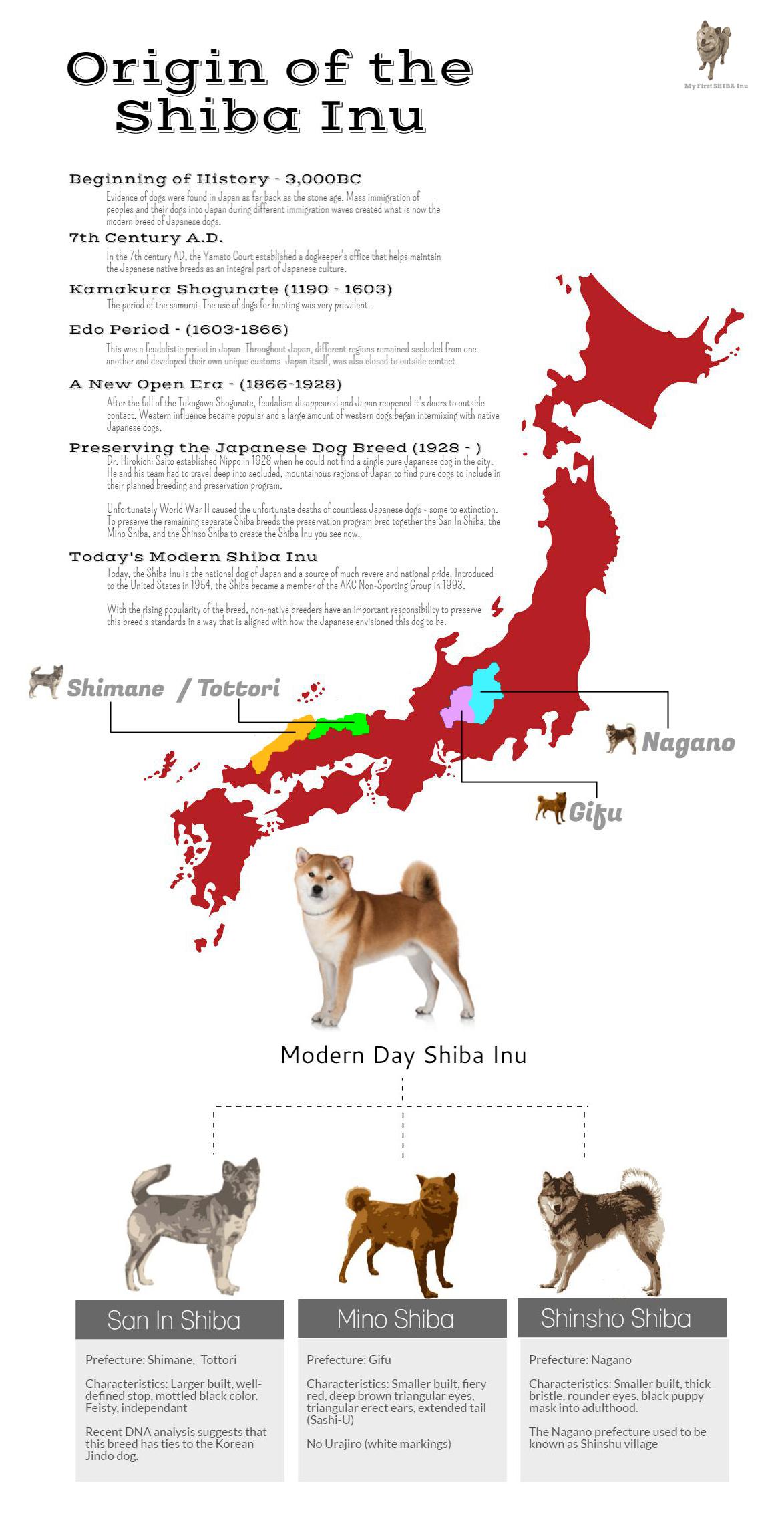 shiba inu history and origins infographic