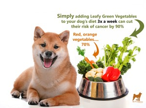 shiba inu healthy vegetables