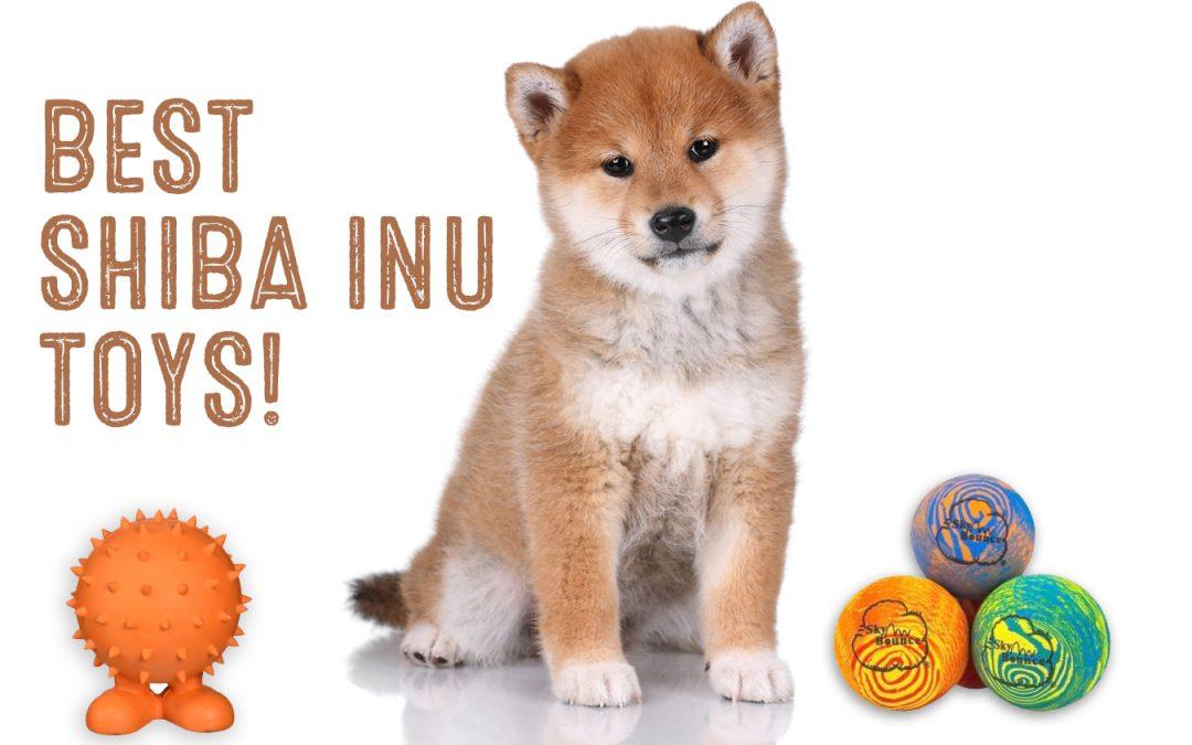 best shiba inu toys