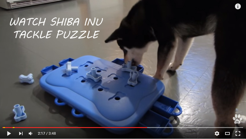 shiba inu playing nina game