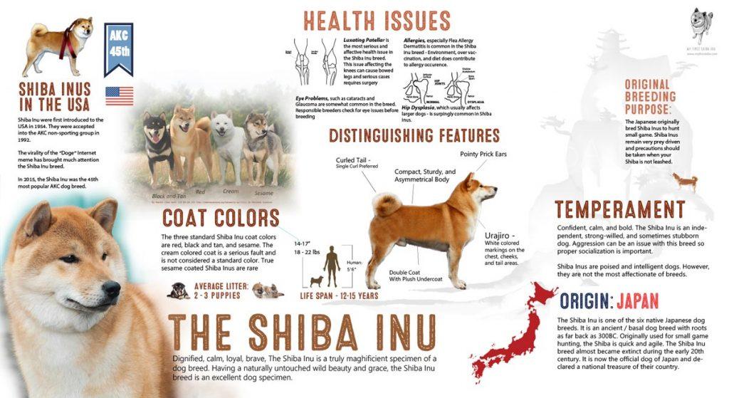 shiba inu infographic