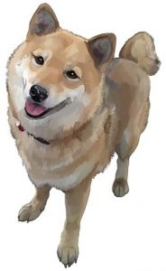 shiba inu puppy painting graphic