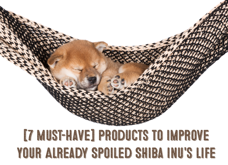 spoiled shiba inu products