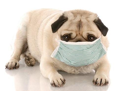 Dangers Of Dog Eating Poop