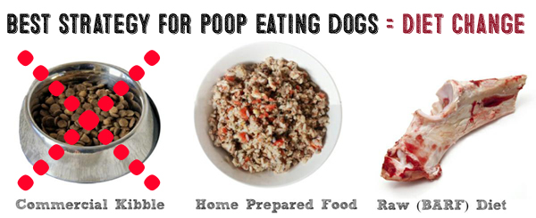 How Often To Change Dog Food