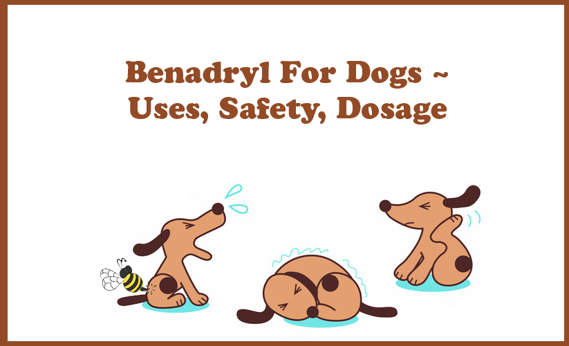 Benadryl For Dogs - What Are The Uses? Is Benadryl Safe For