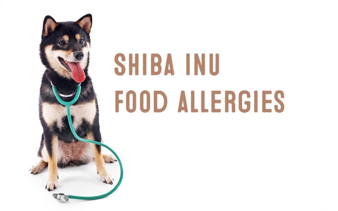 Shiba Inu Food Allergies My First Shiba Inu