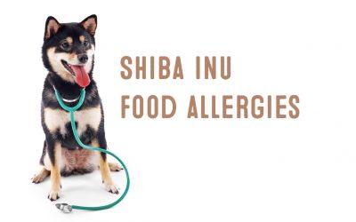 Shiba Inu Food Allergies