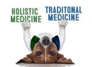 holistic dog allergy vs traditional medicine