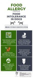 infographic dog allergies