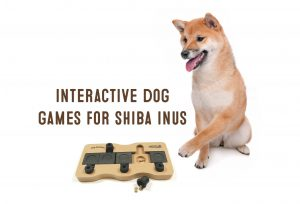 interactive dog toy for shiba inus