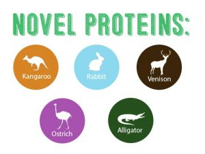 shiba inu allergies novel protein infographic