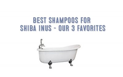 The Best Shampoos For Shiba Inus – Our Three Favorites