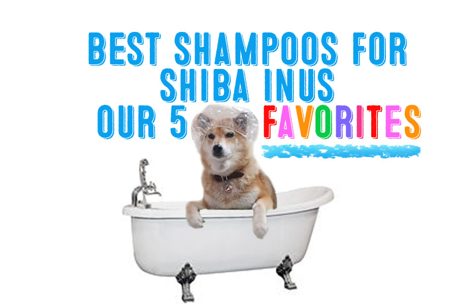 The Best Shampoos For Shiba Inus – Our Five Favorites