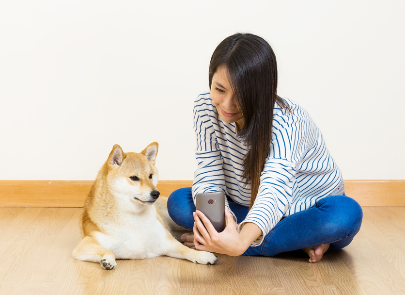 comparing the size of a shiba inu to a human