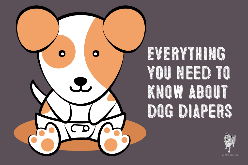 Everything You Need To Know About Dog Diapers
