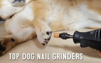 Dog Nail Grinder – What Are Dog Nail Grinders Used For?