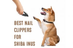 best nail clippers for shiba inus