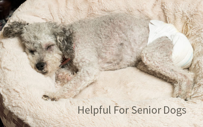 senior dog using dog diapers